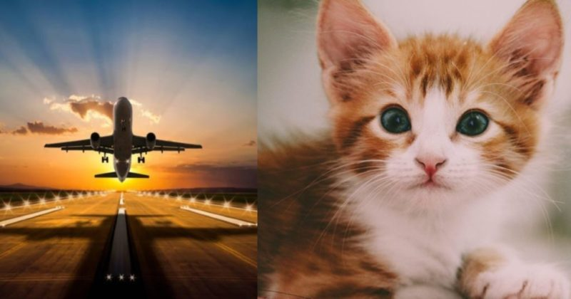 Sudanese Plane Makes Emergency Landing After A Cat Attacks Pilot